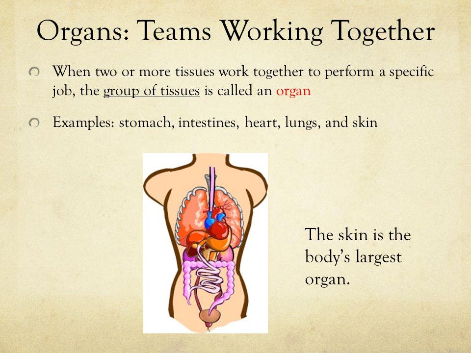 Organs: Teams Working Together