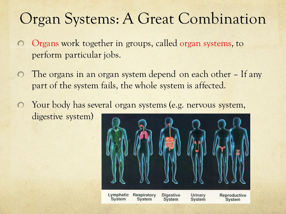Organ Systems: A Great Combination