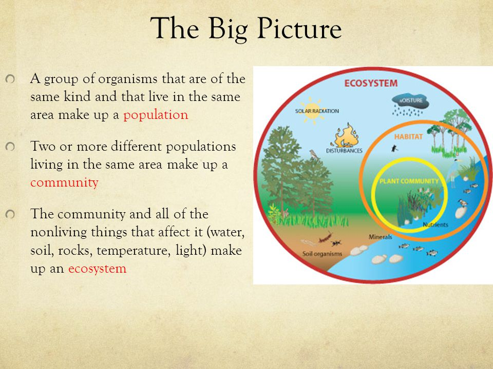 The Big Picture A group of organisms that are of the same kind and that live in the same area make up a population.