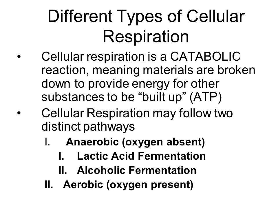 Different Types of Cellular Respiration