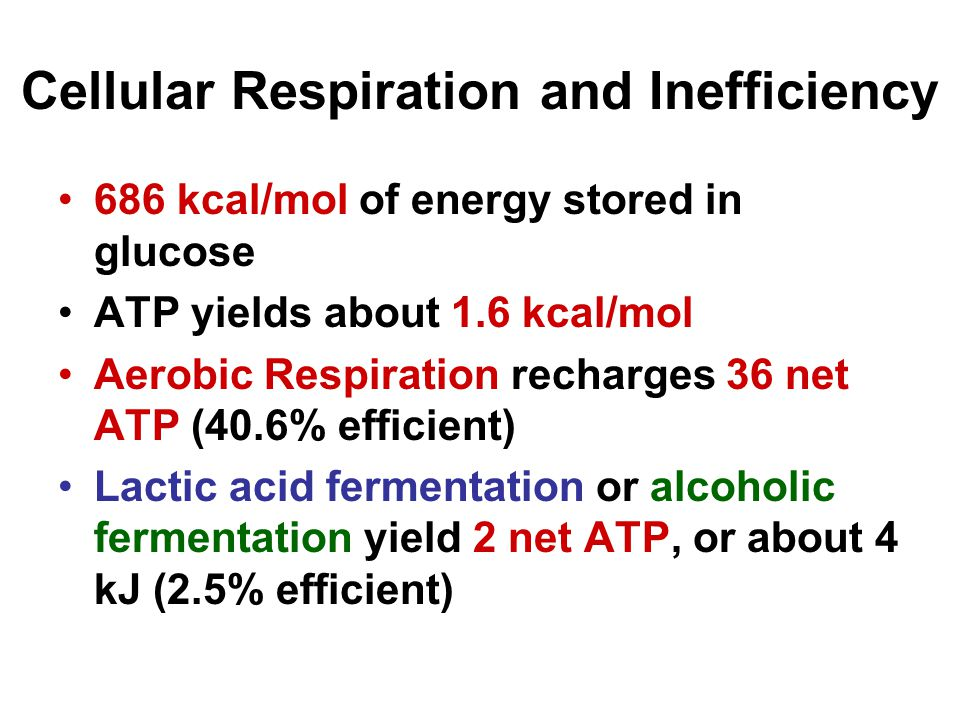 Cellular Respiration and Inefficiency