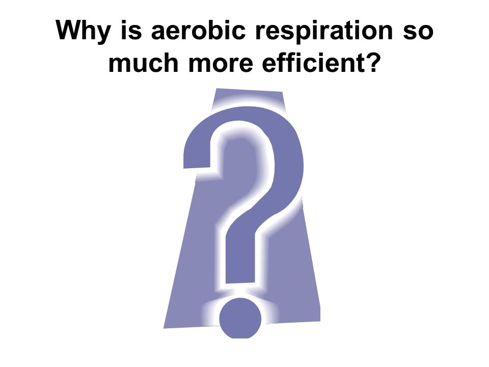 Why is aerobic respiration so much more efficient
