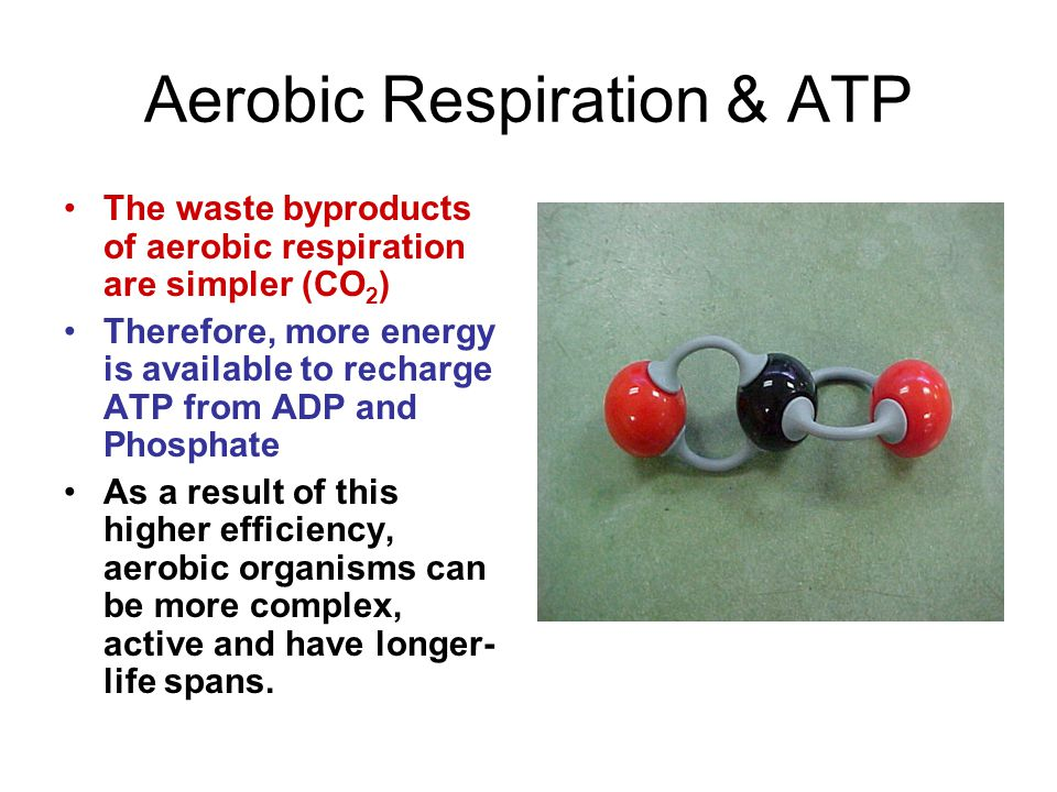 Aerobic Respiration & ATP