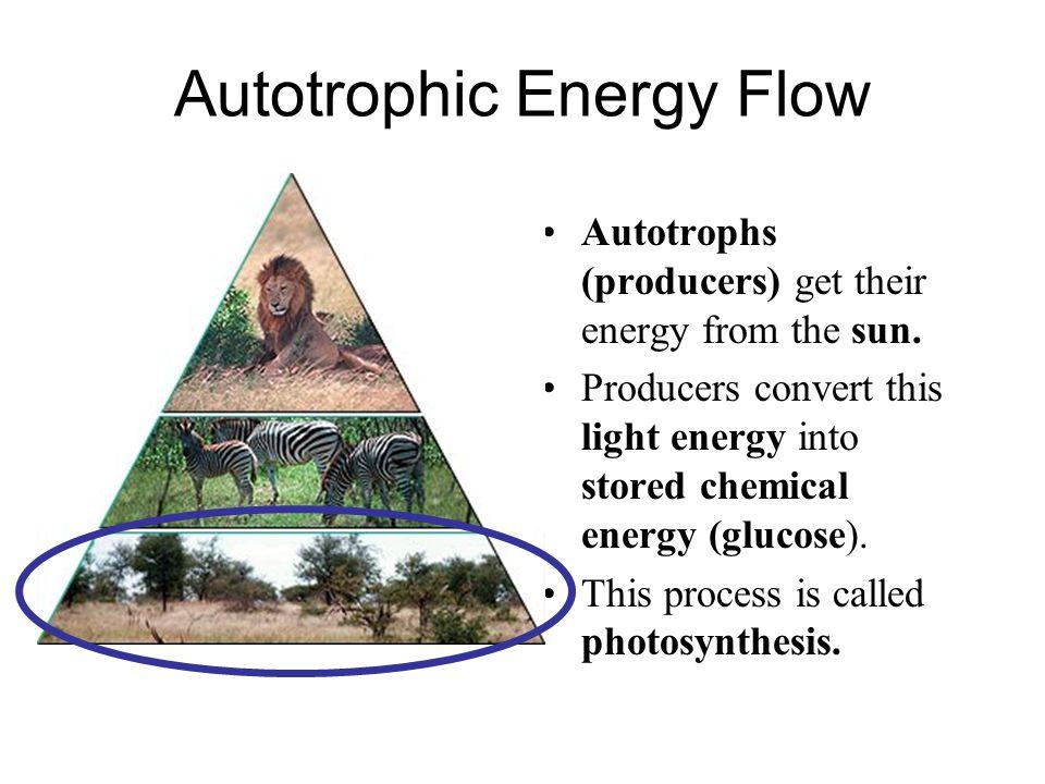 Autotrophic Energy Flow