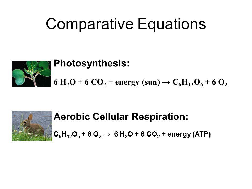 Comparative Equations