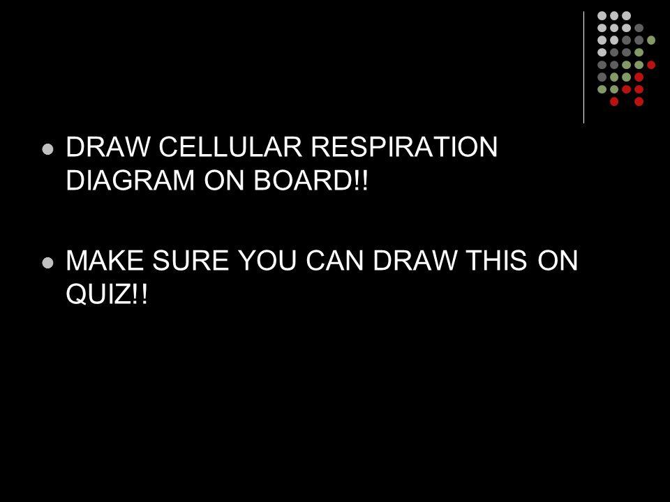 DRAW CELLULAR RESPIRATION DIAGRAM ON BOARD!!