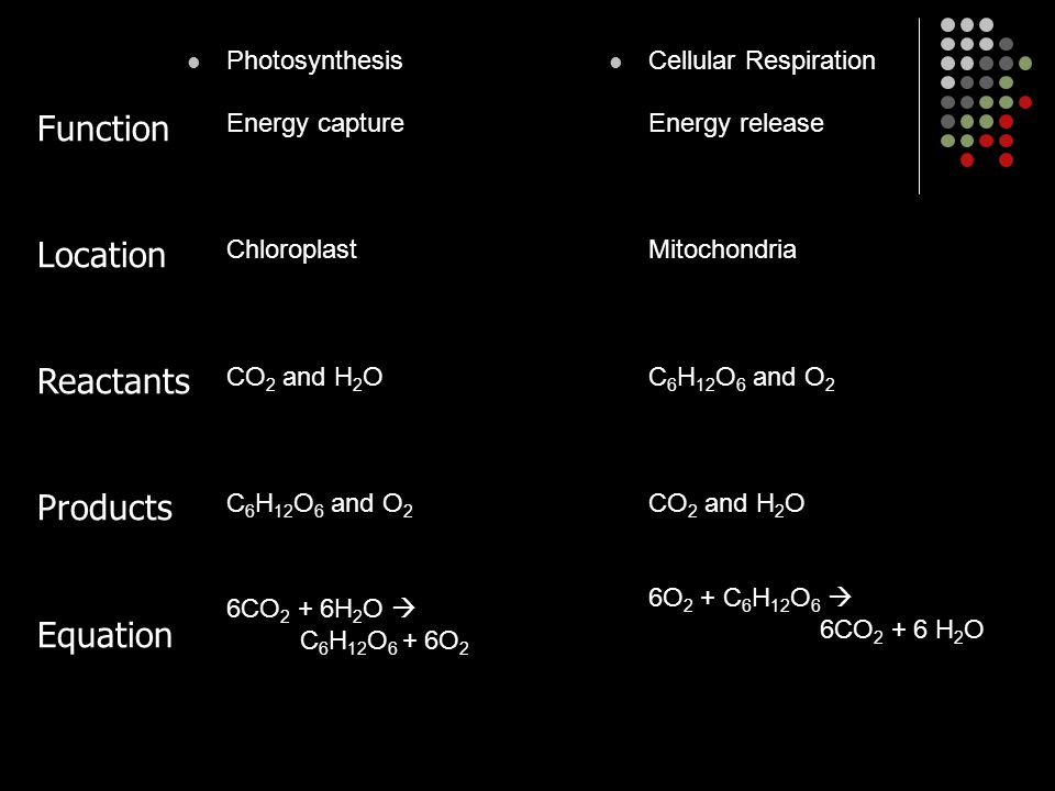 Function Location Reactants Products Equation Photosynthesis