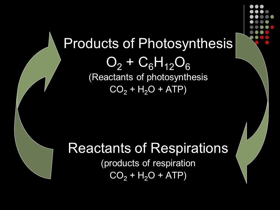 Products of Photosynthesis O2 + C6H12O6