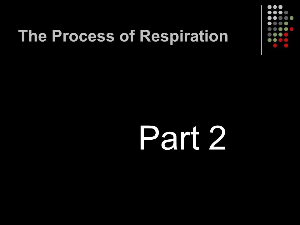 The Process of Respiration