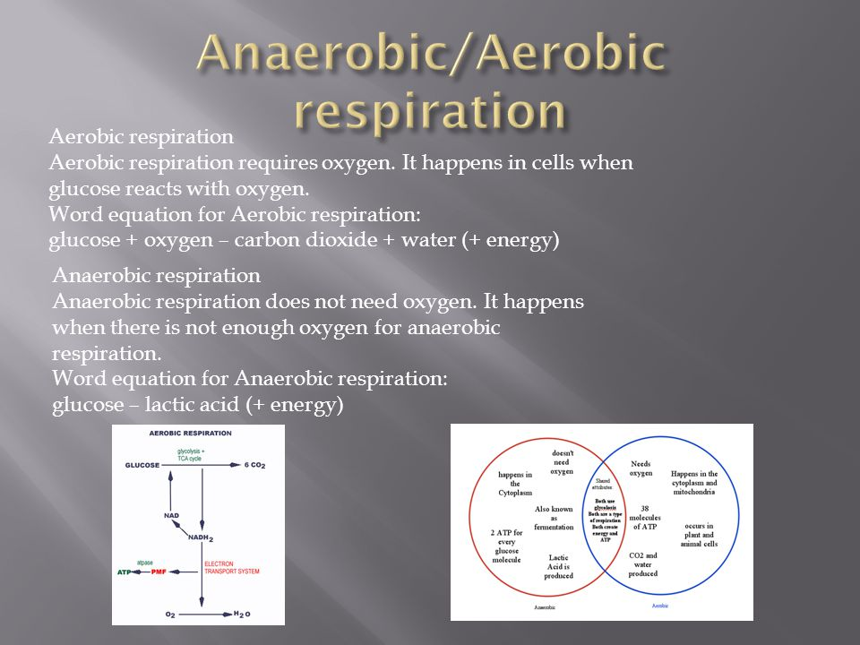 Anaerobic/Aerobic respiration