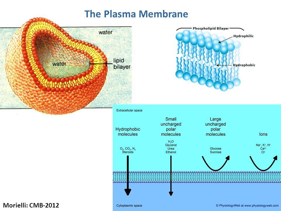 The Plasma Membrane Morielli: CMB-2012