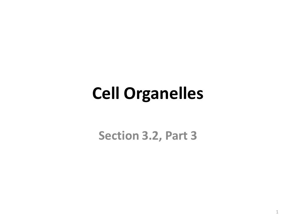 Cell Organelles Section 3.2, Part 3