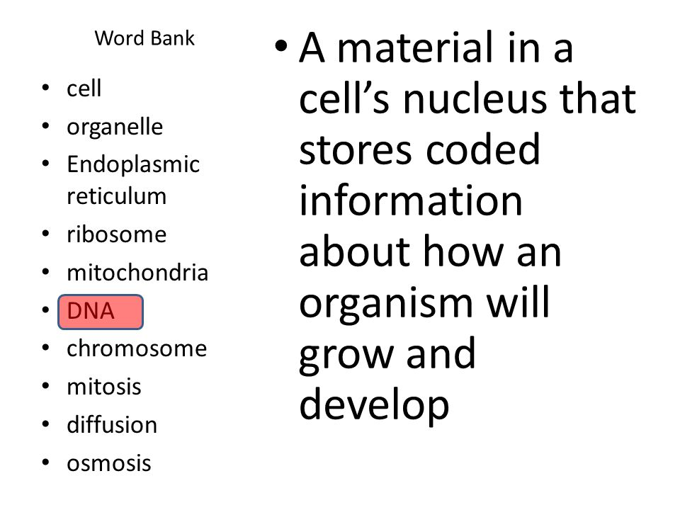 Word Bank A material in a cell's nucleus that stores coded information about how an organism will grow and develop.