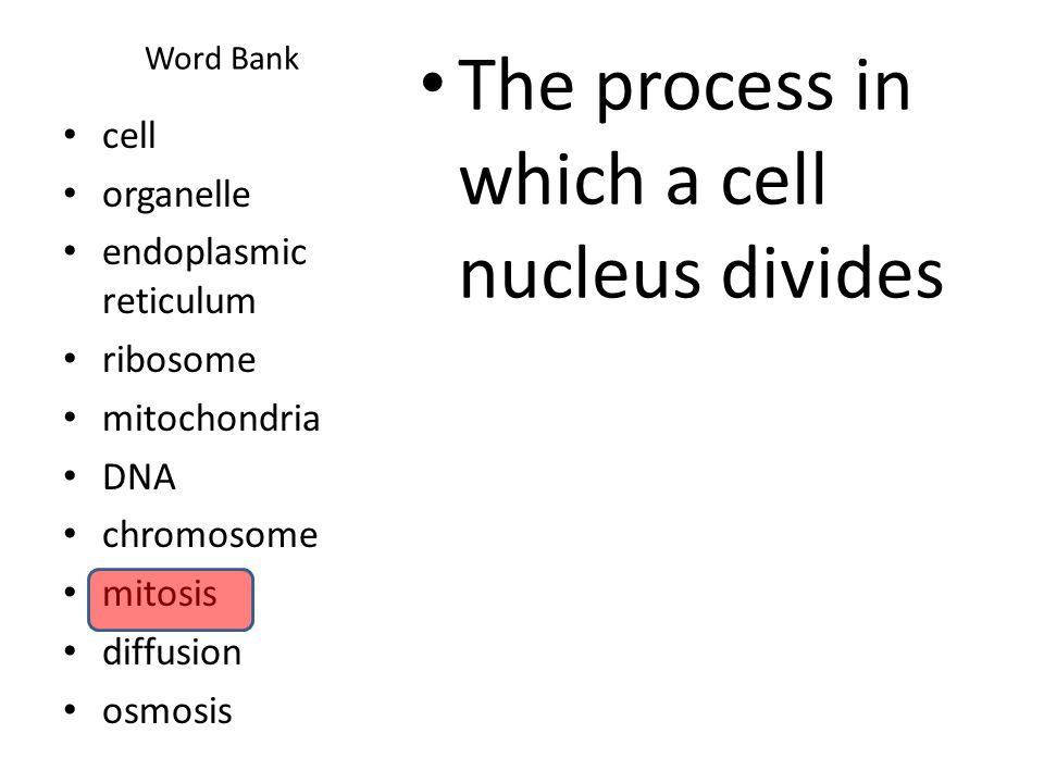 The process in which a cell nucleus divides
