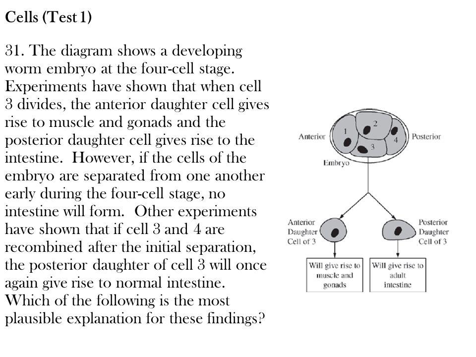 Cells (Test 1)