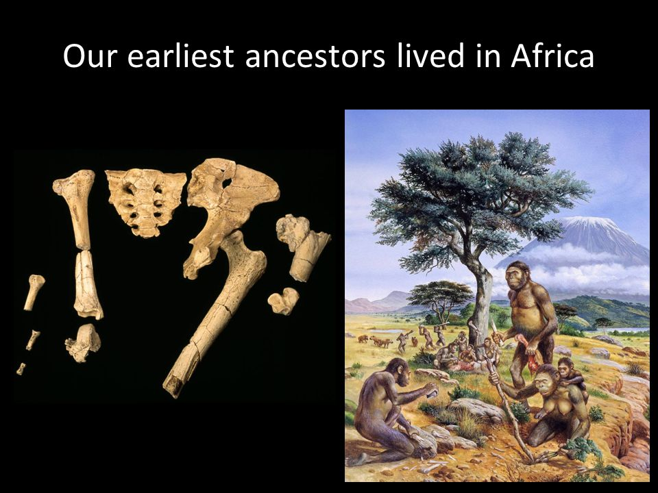 Our earliest ancestors lived in Africa