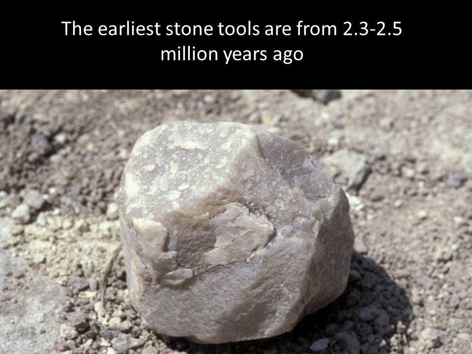 The earliest stone tools are from 2.3-2.5 million years ago