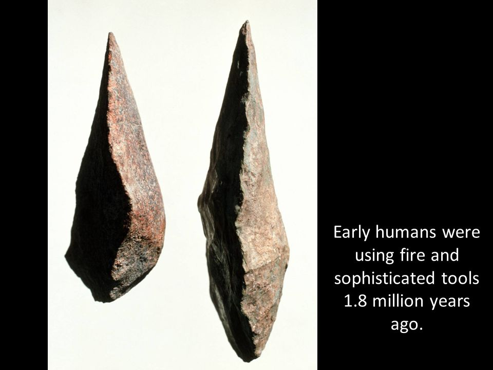 Early humans were using fire and sophisticated tools 1