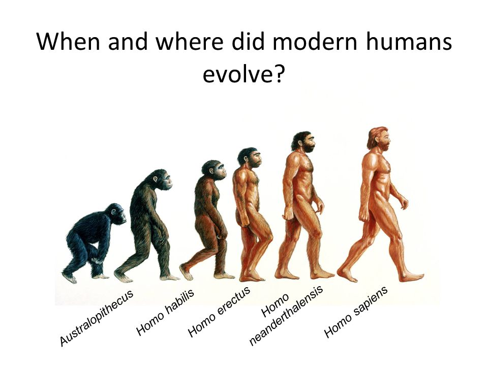 When and where did modern humans evolve