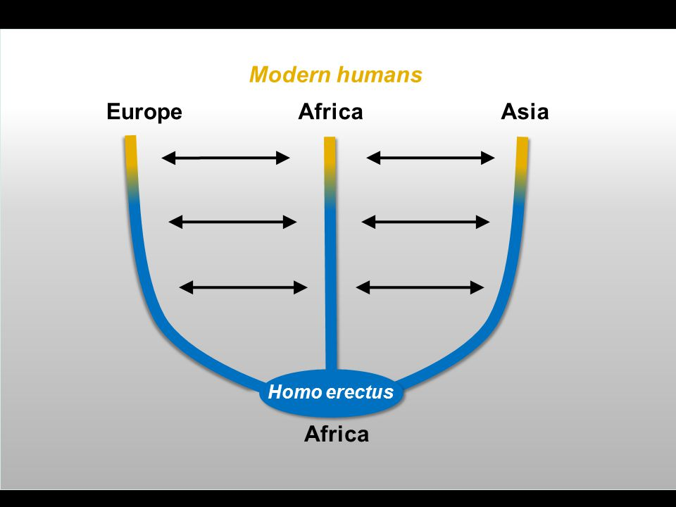 Modern humans Europe Africa Asia Africa Homo erectus