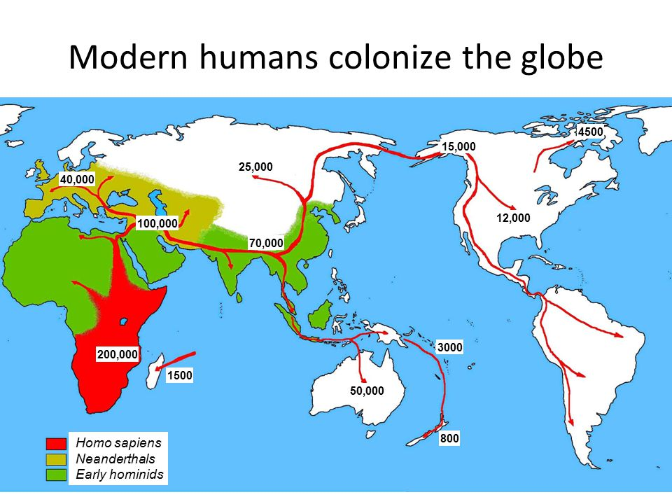 Modern humans colonize the globe