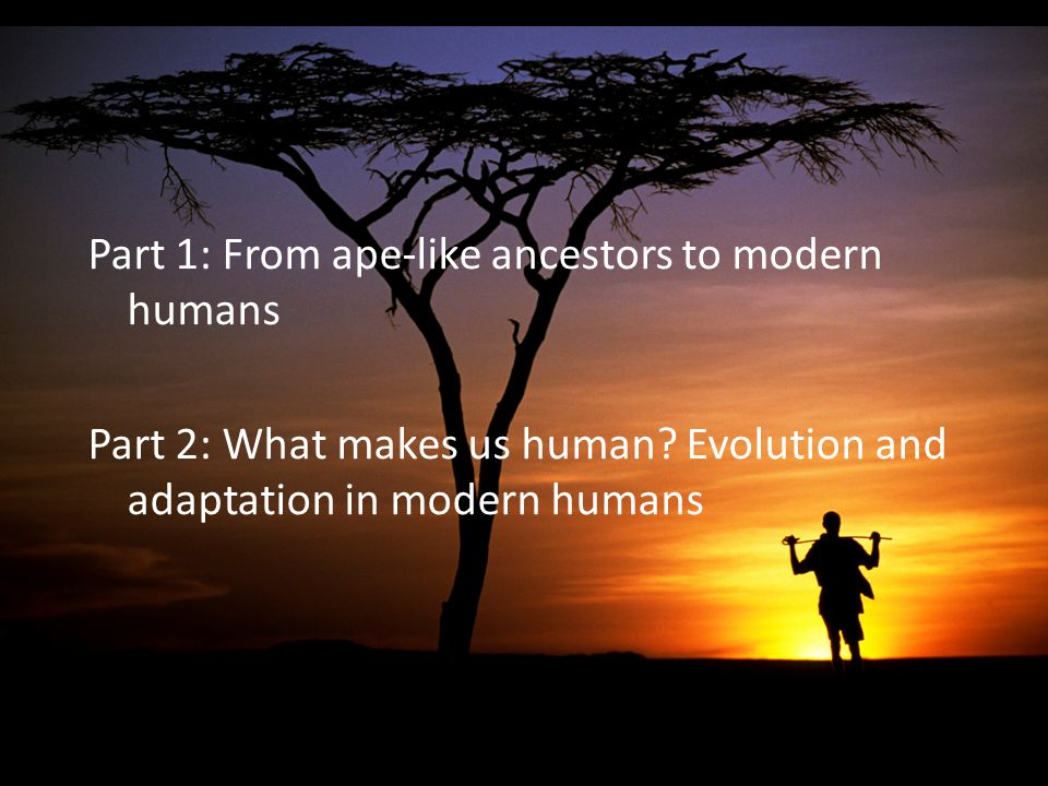 Part 1: From ape-like ancestors to modern humans