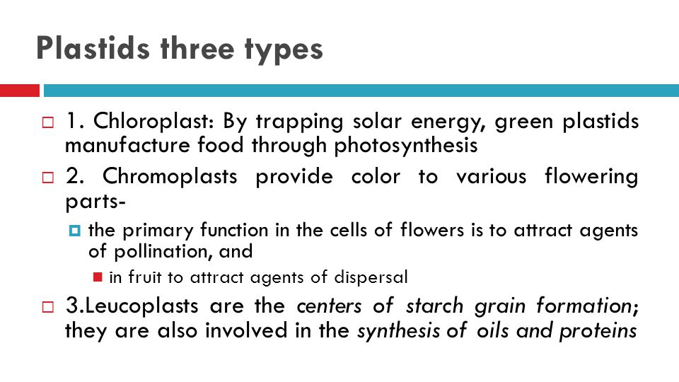 Plastids three types 1. Chloroplast: By trapping solar energy, green plastids manufacture food through photosynthesis.