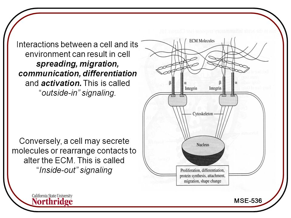 Interactions between a cell and its environment can result in cell spreading, migration, communication, differentiation and activation. This is called outside-in signaling.
