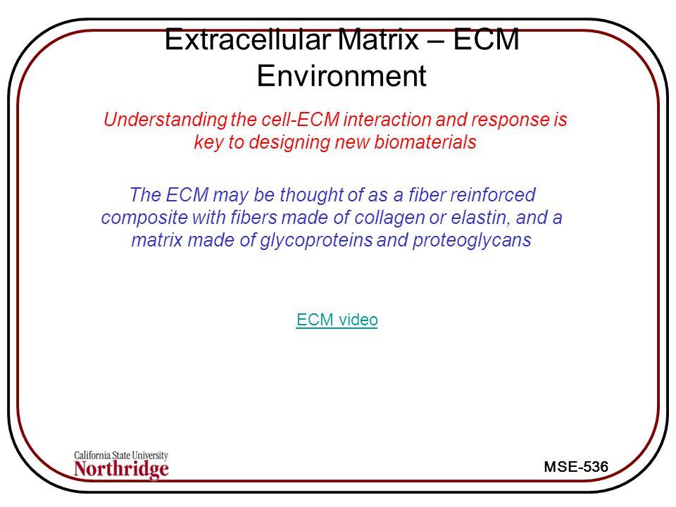 Extracellular Matrix – ECM Environment