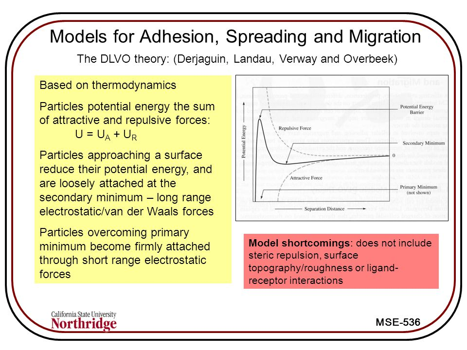 Models for Adhesion, Spreading and Migration