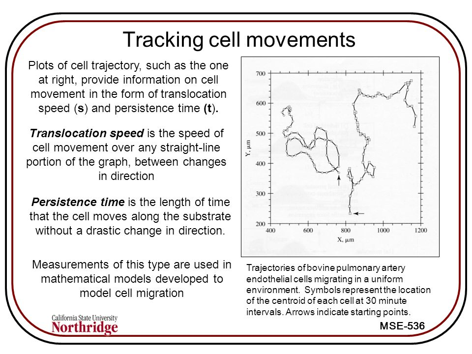 Tracking cell movements