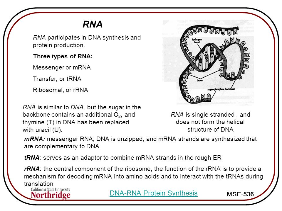 DNA-RNA Protein Synthesis