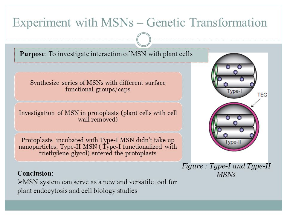 Experiment with MSNs – Genetic Transformation