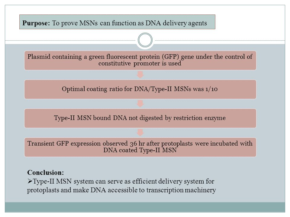 Purpose: To prove MSNs can function as DNA delivery agents