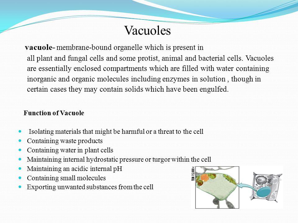 Vacuoles
