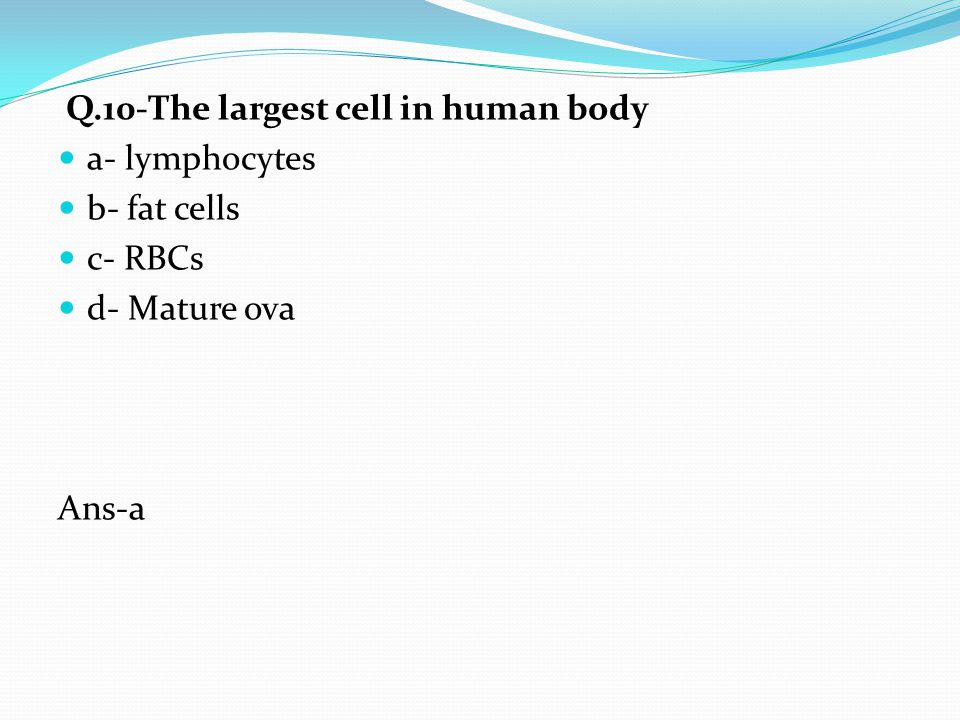 Q.10-The largest cell in human body