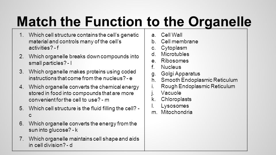 Match the Function to the Organelle