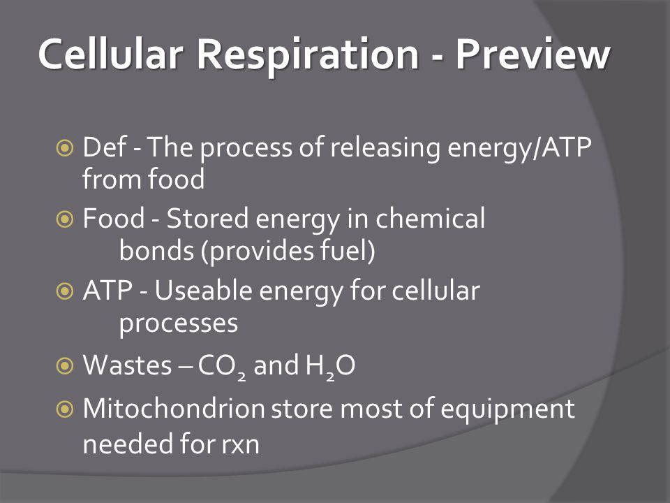 Cellular Respiration - Preview