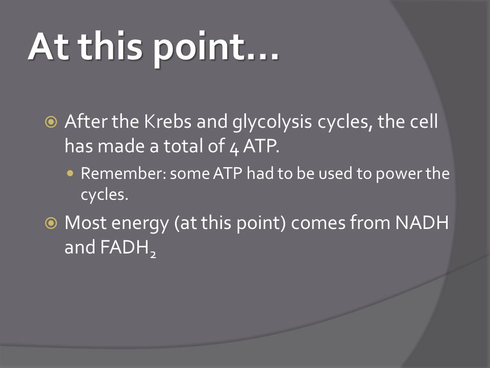 At this point… After the Krebs and glycolysis cycles, the cell has made a total of 4 ATP. Remember: some ATP had to be used to power the cycles.