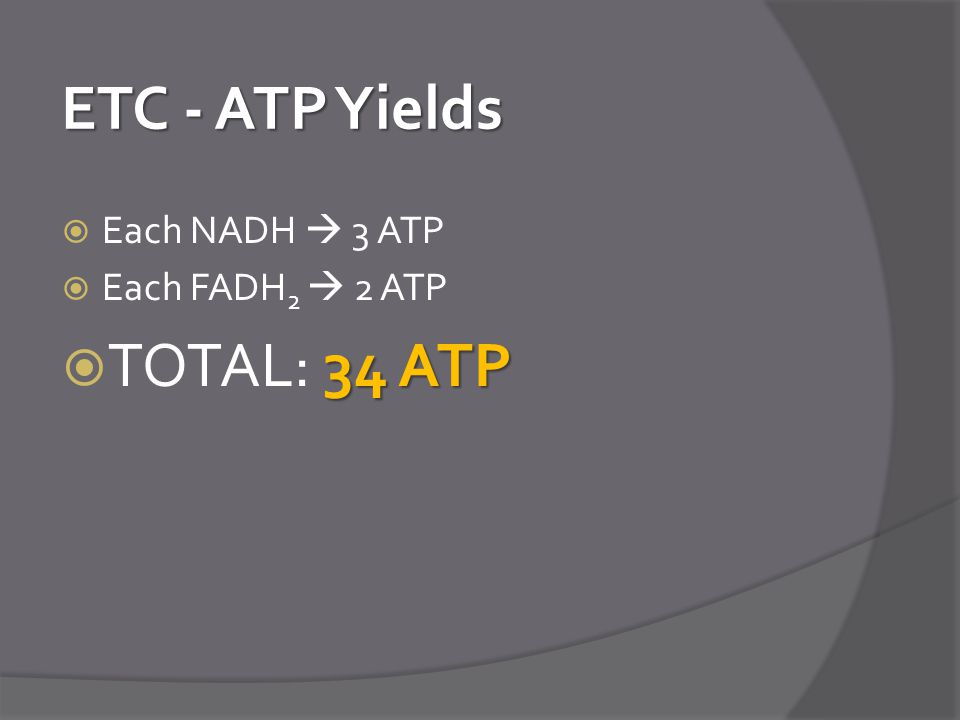ETC - ATP Yields Each NADH  3 ATP Each FADH2  2 ATP TOTAL: 34 ATP