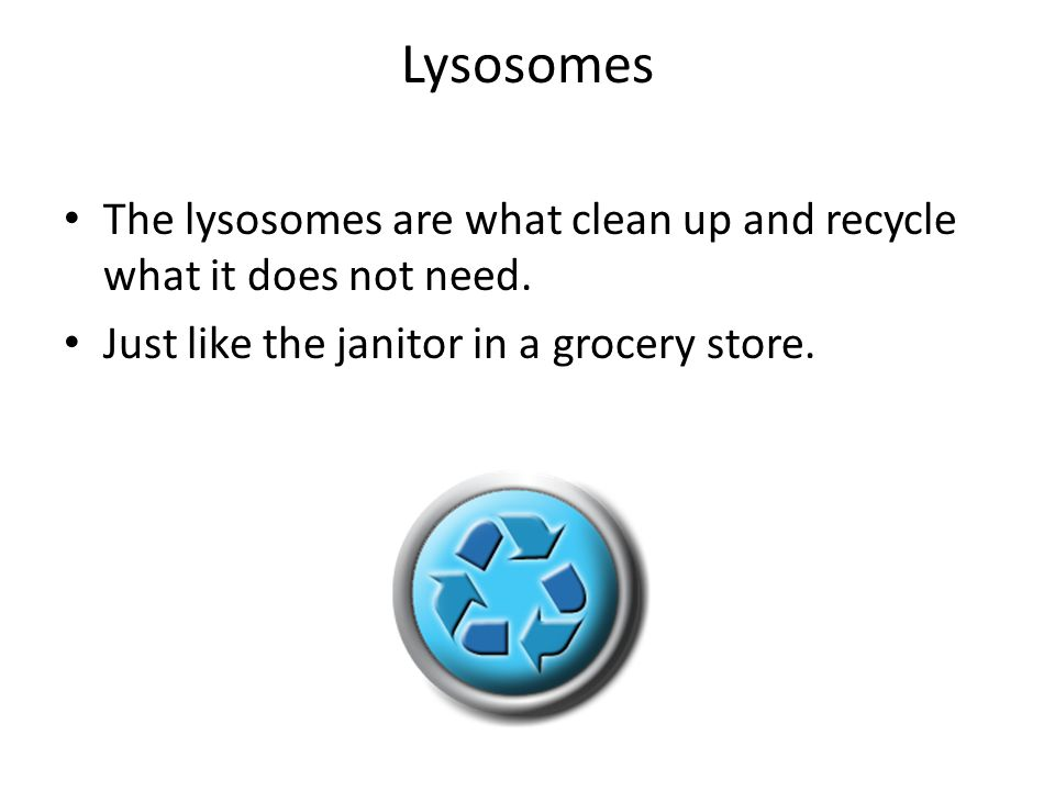 Lysosomes The lysosomes are what clean up and recycle what it does not need.