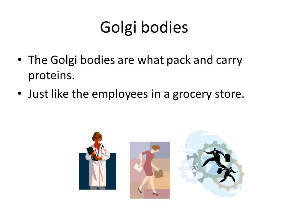 Golgi bodies The Golgi bodies are what pack and carry proteins.