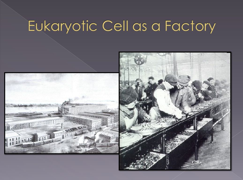 Eukaryotic Cell as a Factory