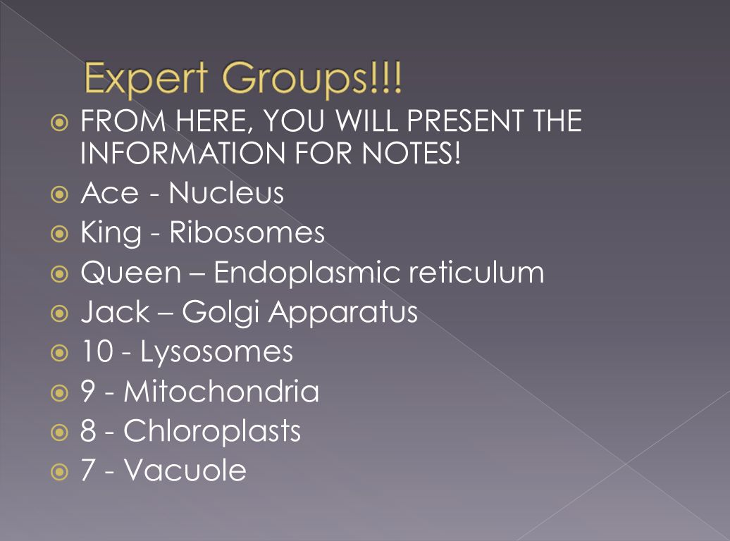 Expert Groups!!! FROM HERE, YOU WILL PRESENT THE INFORMATION FOR NOTES! Ace - Nucleus. King - Ribosomes.