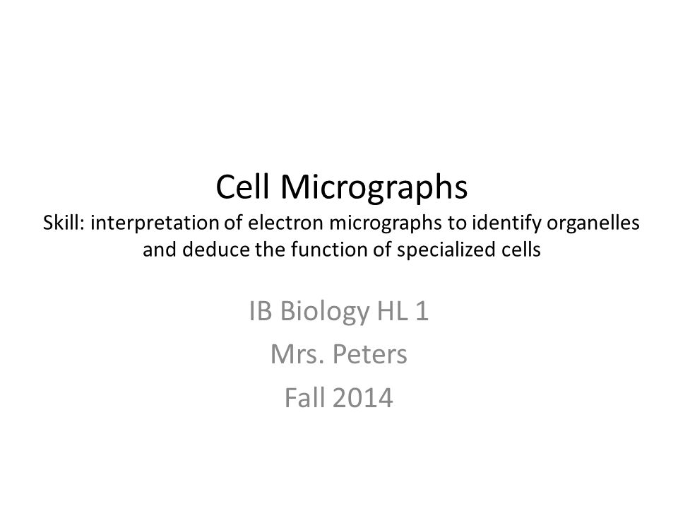 IB Biology HL 1 Mrs. Peters Fall 2014