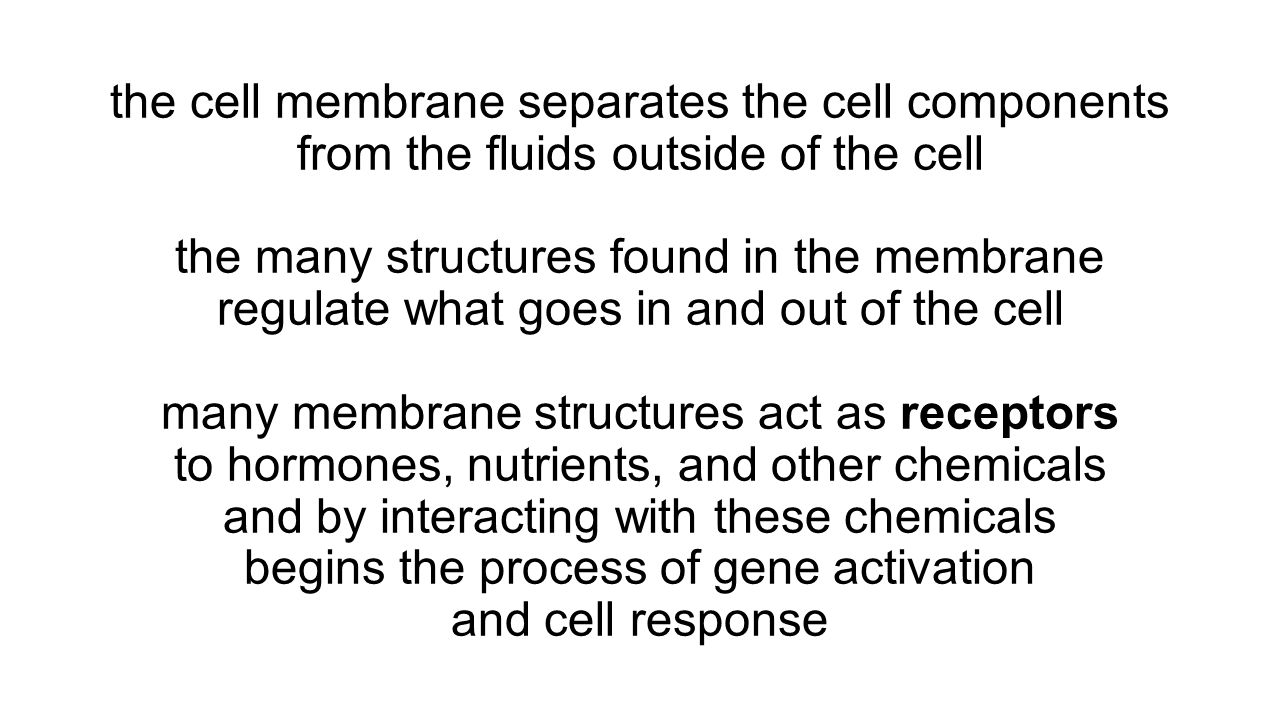 the cell membrane separates the cell components from the fluids outside of the cell the many structures found in the membrane regulate what goes in and out of the cell many membrane structures act as receptors to hormones, nutrients, and other chemicals and by interacting with these chemicals begins the process of gene activation and cell response