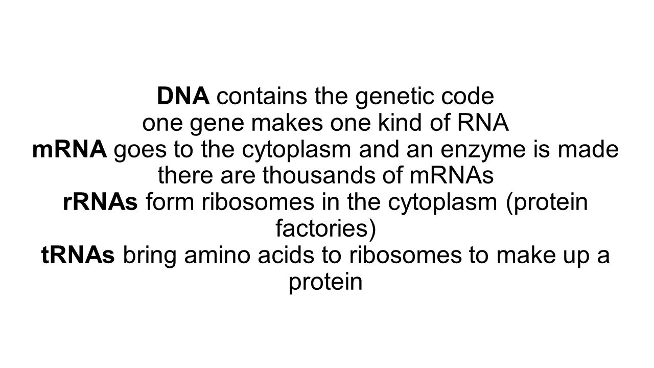 DNA contains the genetic code one gene makes one kind of RNA mRNA goes to the cytoplasm and an enzyme is made there are thousands of mRNAs rRNAs form ribosomes in the cytoplasm (protein factories) tRNAs bring amino acids to ribosomes to make up a protein