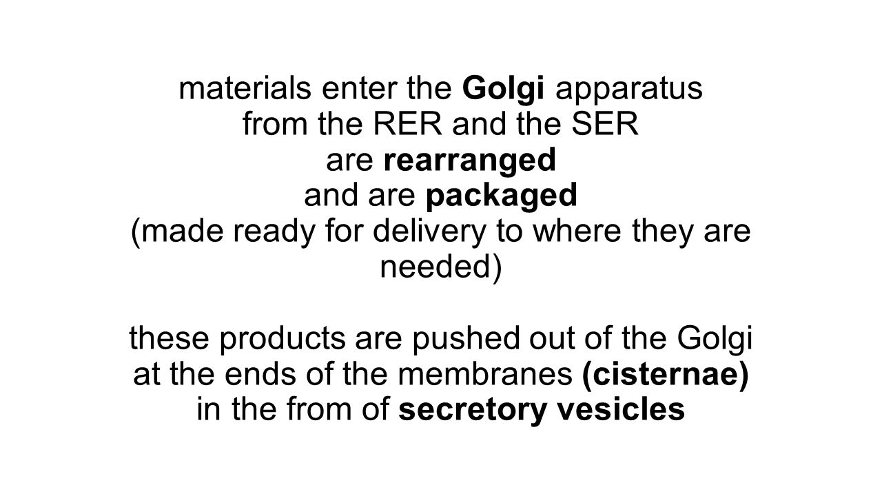 materials enter the Golgi apparatus from the RER and the SER are rearranged and are packaged (made ready for delivery to where they are needed) these products are pushed out of the Golgi at the ends of the membranes (cisternae) in the from of secretory vesicles