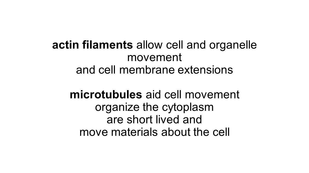 actin filaments allow cell and organelle movement and cell membrane extensions microtubules aid cell movement organize the cytoplasm are short lived and move materials about the cell