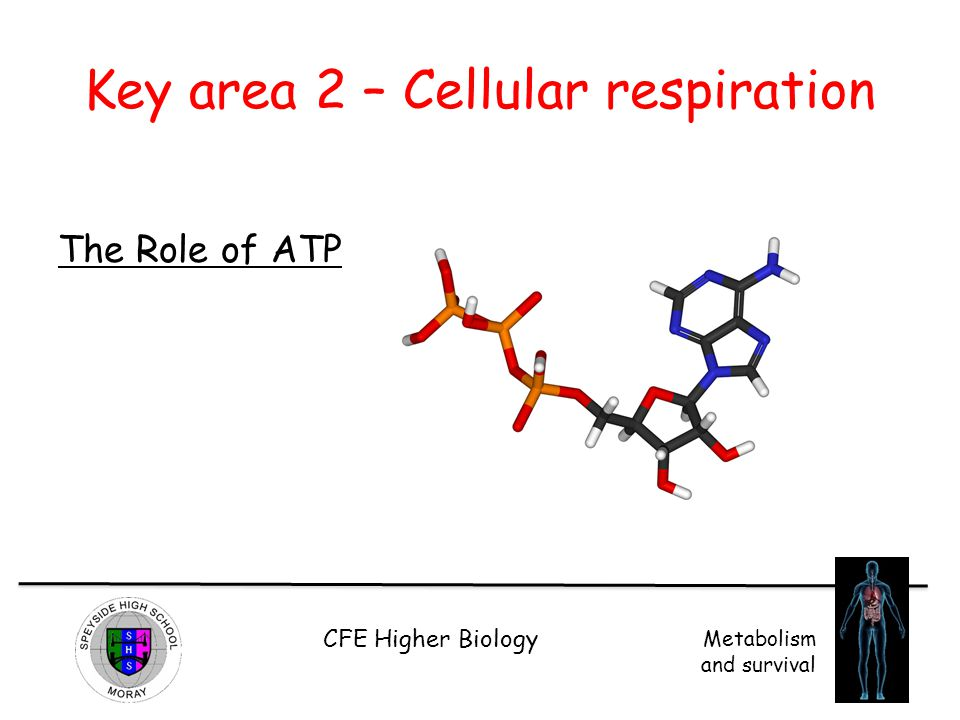 Key area 2 – Cellular respiration